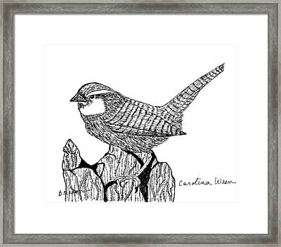 Carolina Wren Framed Print by Becky Mason