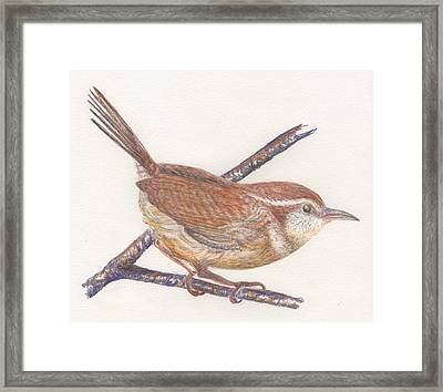 Carolina Wren Framed Print by Bev Veals
