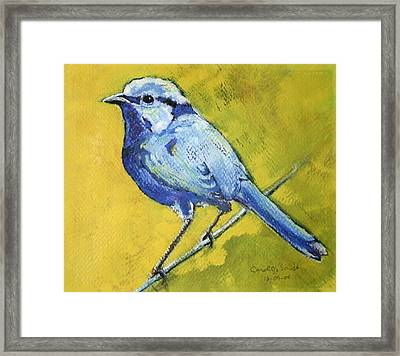 Carolina Wren Framed Print