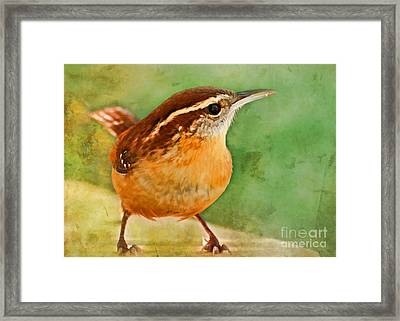 Carolina Wren Greeting Card Size Framed Print by Debbie Portwood