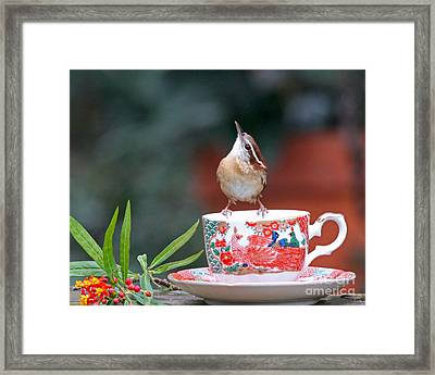 Carolina Wren Is This Green Tea Framed Print by Luana K Perez
