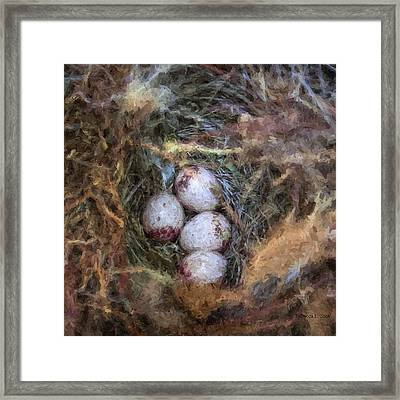 Carolina Wren Nest Framed Print by Bellesouth Studio