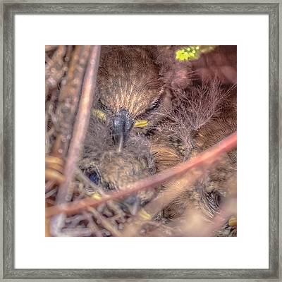 Framed Print featuring the photograph Carolina Wren Nest by Rob Sellers