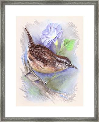 Carolina Wren With Morning Glory Framed Print by MM Anderson