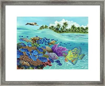 Coral Carnival Framed Print by Carolyn Steele