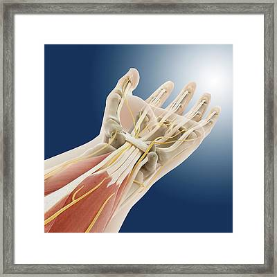 Carpal Tunnel Wrist Anatomy Framed Print by Springer Medizin