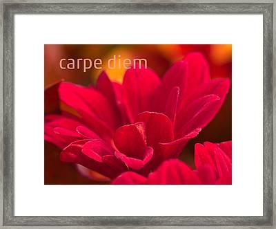 Carpe Diem Framed Print by Lutz Baar