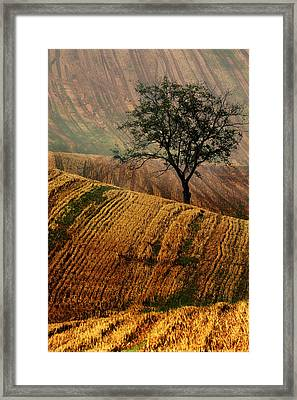 Carpet Fields Of Moravia Framed Print