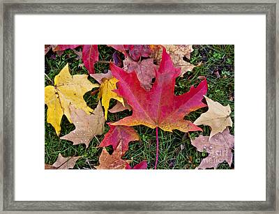 Framed Print featuring the photograph Carpet Of Colour by Maria Janicki