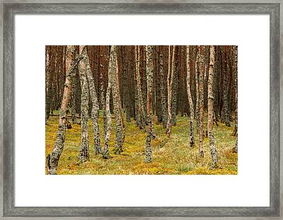 Carpeted Forest Framed Print