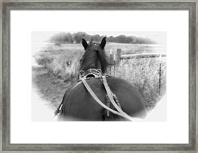 Carraige View Horse Framed Print