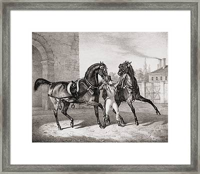 Carriage Horses For The King Framed Print by French School