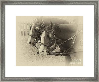 Carriage Horses I Framed Print by Terry Rowe