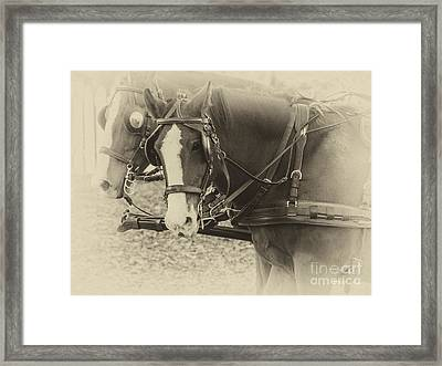 Carriage Horses II Framed Print