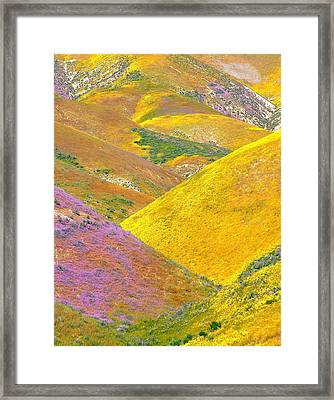 Carrizo Wildflowers Vertical Framed Print by Marc Crumpler