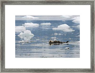 Carry Me Framed Print