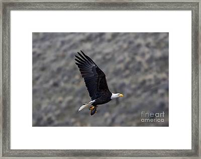 Carrying A Meal Framed Print