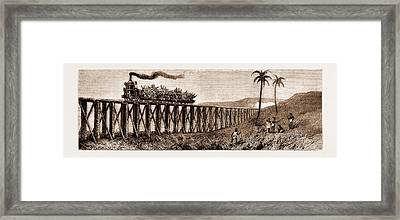 Carrying Sugar Cane On The Pioneer Plantation Framed Print by Litz Collection