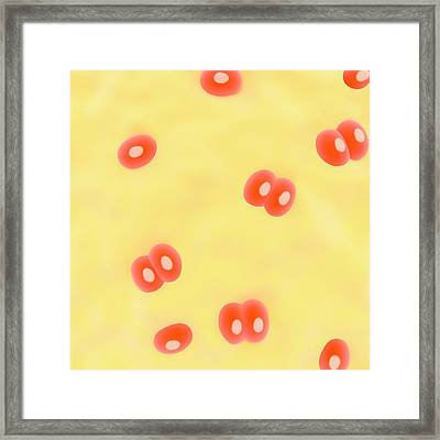 Cartilage Tissue Framed Print by Science Photo Library