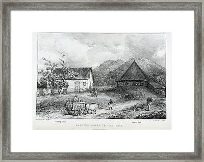 Carting Canes To The Mill Framed Print