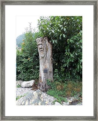 Carved Tree Framed Print