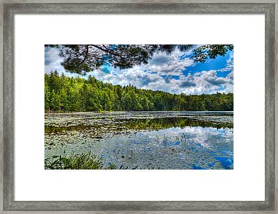 Cary Lake In The Summer Framed Print