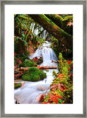 Cascade Creek Framed Print by Randy Giesbrecht