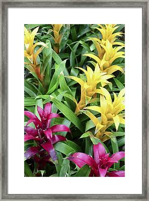 Cascade Garden Framed Print
