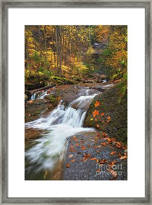 Cascade In The Glen Framed Print by Michele Steffey