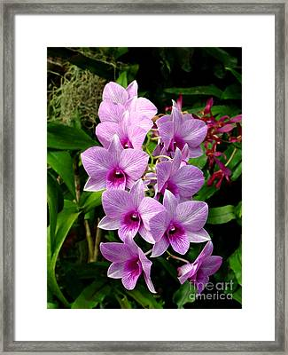 Cascading Lilac Orchids Framed Print