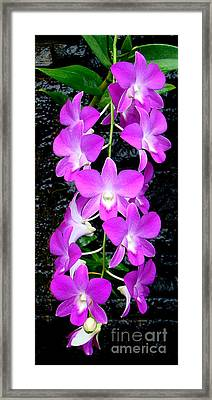 Cascading Orchids Framed Print by Sue Melvin