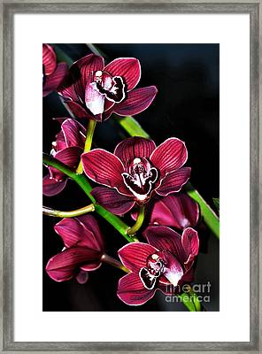 Cascading Red Orchids Framed Print by Kaye Menner