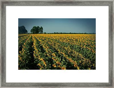Cash Crop Framed Print