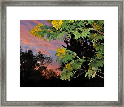 Casia Sunrise Framed Print