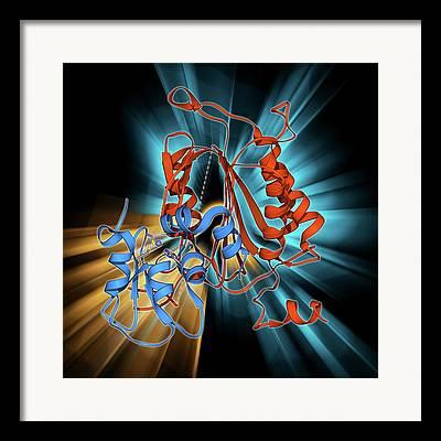 Apoptosis Framed Prints