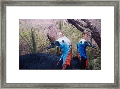 Cassowaries At Home Framed Print