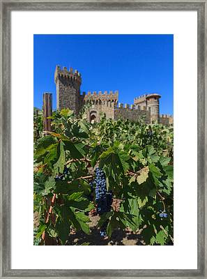 Ripe On The Vine Castelle Di Amorosa Framed Print by Scott Campbell
