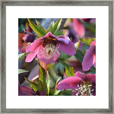 Casting Fragrance Framed Print