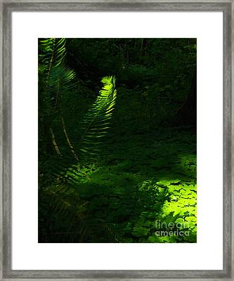 Casting Light Framed Print by Tim Rice