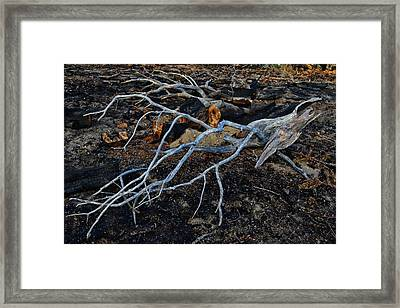 Casualties Framed Print