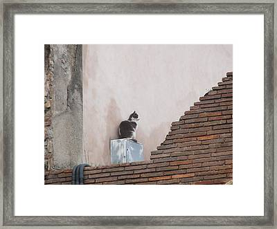 Framed Print featuring the photograph Cat Above The Roman Ruins by Tiffany Erdman