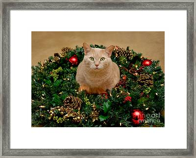 Cat And Christmas Wreath Framed Print