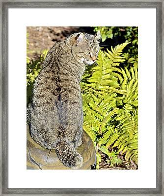 Cat And Ferns Framed Print by Susan Leggett