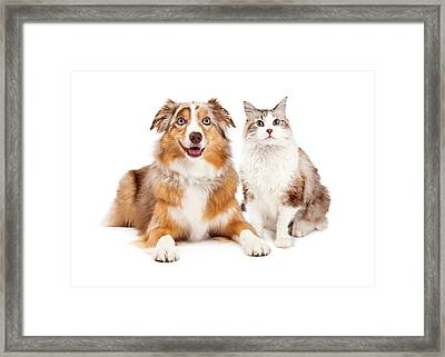 Cat And Happy Dog Together Framed Print by Susan Schmitz