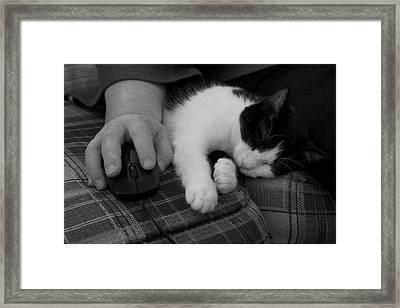 Cat And Mouse Framed Print by Daniel J Kasztelan