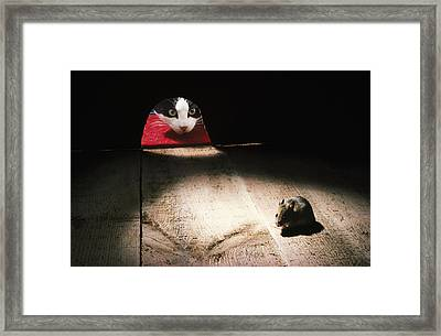 Cat And Mouse Framed Print by John Daniels