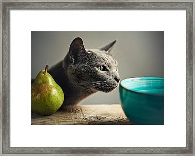 Cat And Pears Framed Print