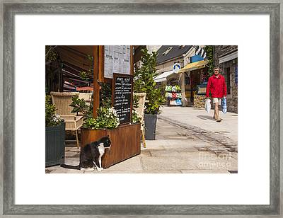 Cat And Restaurant Concarneau Brittany France Framed Print by Colin and Linda McKie