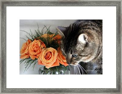 Cat And Roses Framed Print