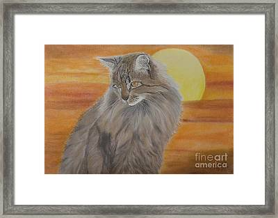 Cat And Sunset  Framed Print by Cybele Chaves